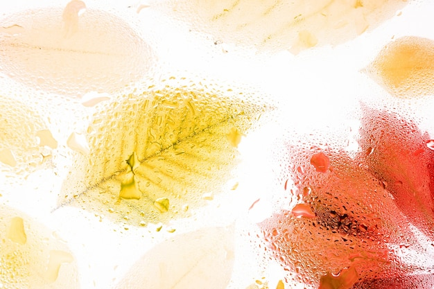 Żółte jesienne liście za mglistym szkłem z kroplami wody i deszczem spadają abstrakcyjne tło