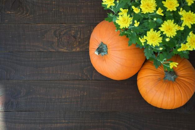 Żółte kwiaty chryzantemy i dwa pomarańczowe dynie na tle starej brązowej desce.