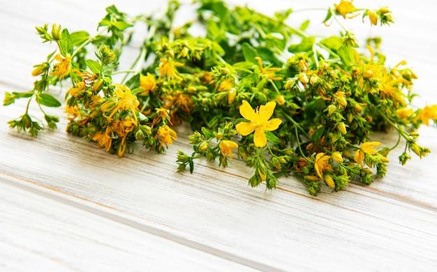 Żółte kwiaty dziurawca zwyczajnego na białym drewnianym tle. dziki kwiat.