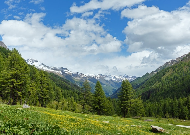 Żółte kwiaty mniszka lekarskiego na letnim zboczu góry (alpy, szwajcaria)