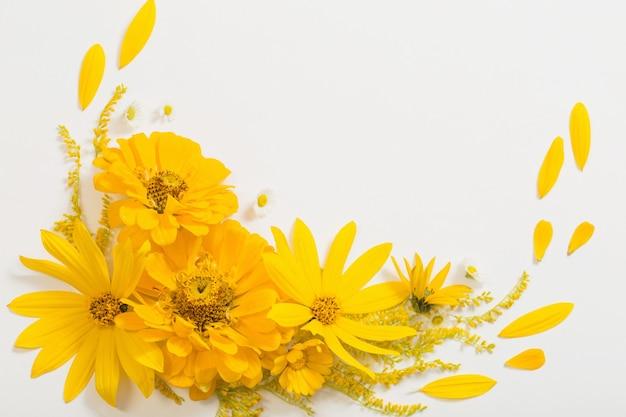 Żółte kwiaty na białym tle