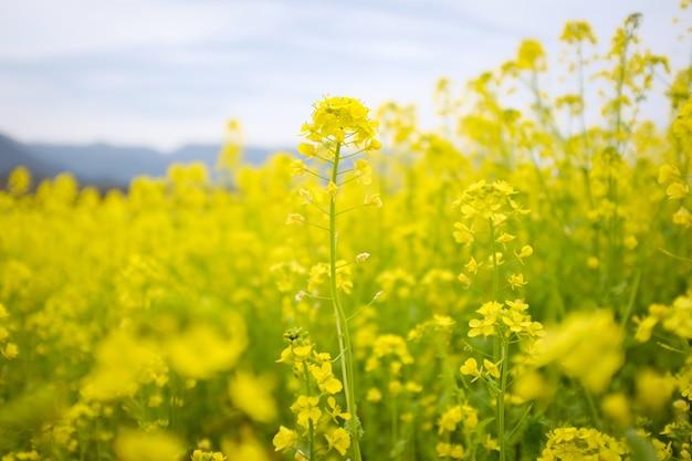 Żółte kwiaty obok siebie na polu