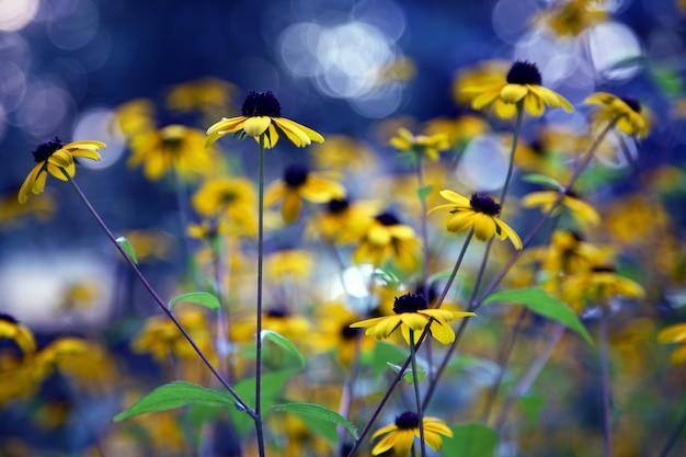 Żółte kwiaty polne