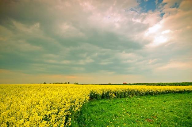 Żółte kwiaty rosnące