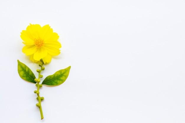 Żółte kwiaty układ kosmosu mieszkanie ay styl pocztówki