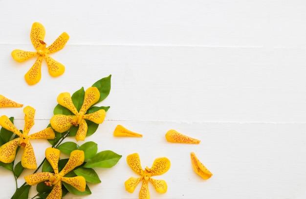 Żółte kwiaty układ orchidei w stylu pocztówki