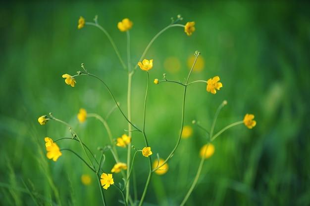 Żółte kwiaty w ogrodzie