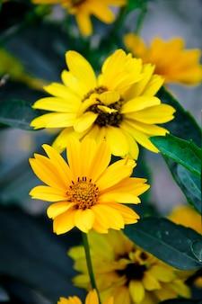 Żółte kwiaty w plenerze
