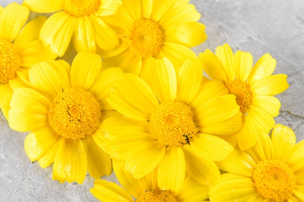 Żółte kwiaty w tle składają się z żółtych rumianków lub stokrotek na szarym modnym tle