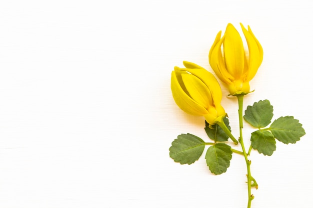 Żółte kwiaty ylang ylang układ pocztówka style