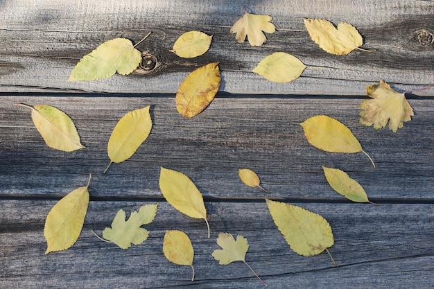 Żółte liście, drewniane tła