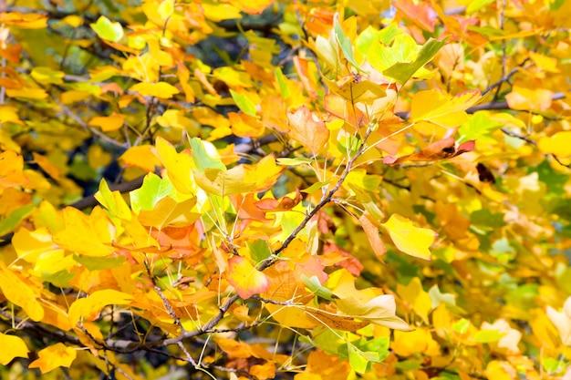 Żółte liście drzewa naturalne jesienne tło