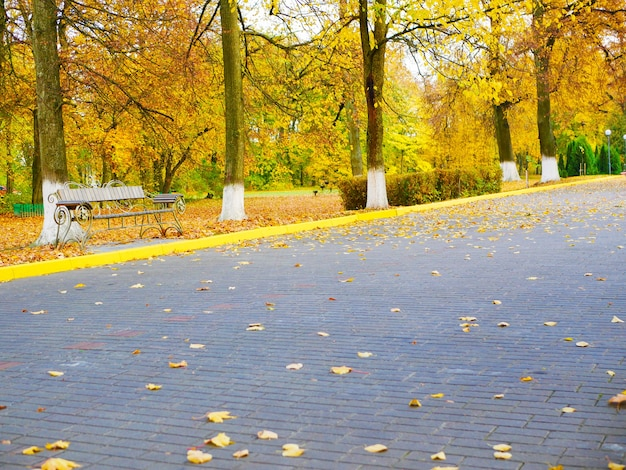 Żółte liście na chodniku jesiennego parku.