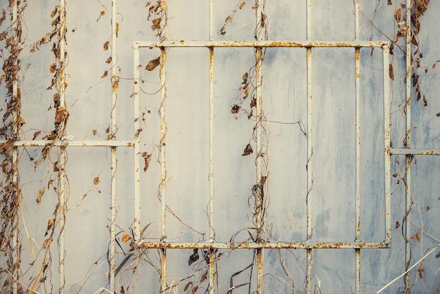 Żółte liście na żelaznym zardzewiałym płocie na żelaznej ścianie