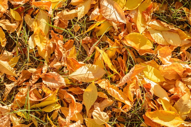 Żółte liście na ziemi wśród zielonej trawie