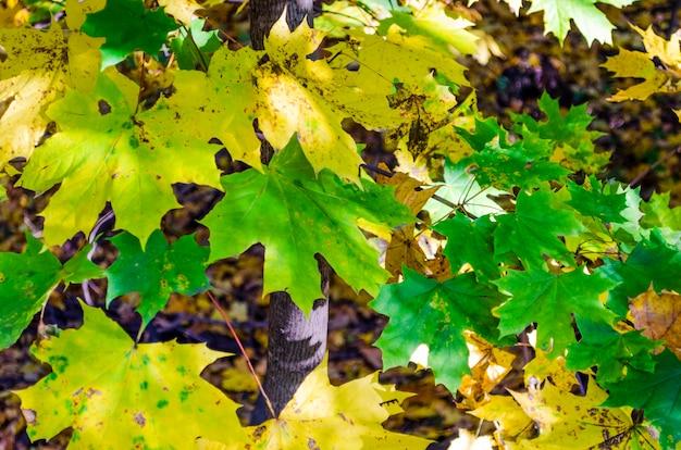 Żółte liście na ziemi
