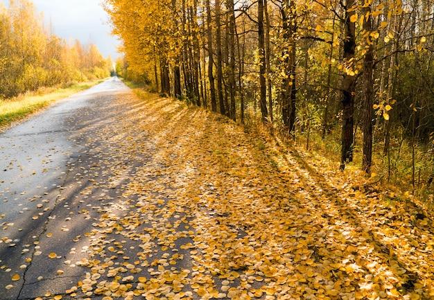 Żółte liście porozrzucane na leśnej drodze w dal.