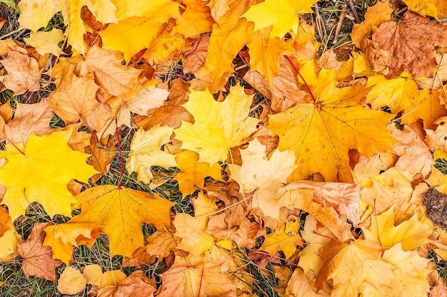 Żółte liście w parku