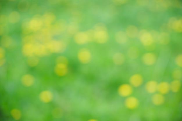 Żółte mlecze na łące w lecie, niewyraźne pole kwiatów