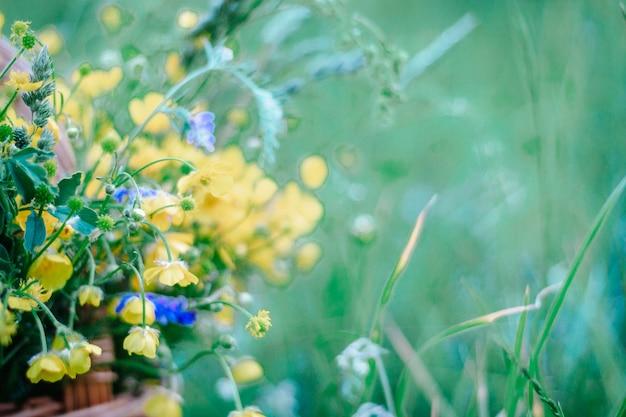 Żółte, niebieskie polne kwiaty w drewnianym wiklinowym koszu. kosz świeżych dzikich kwiatów na polu