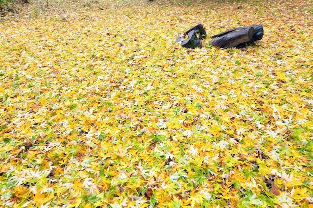 Żółte odcięte liście na jesiennej łące parku