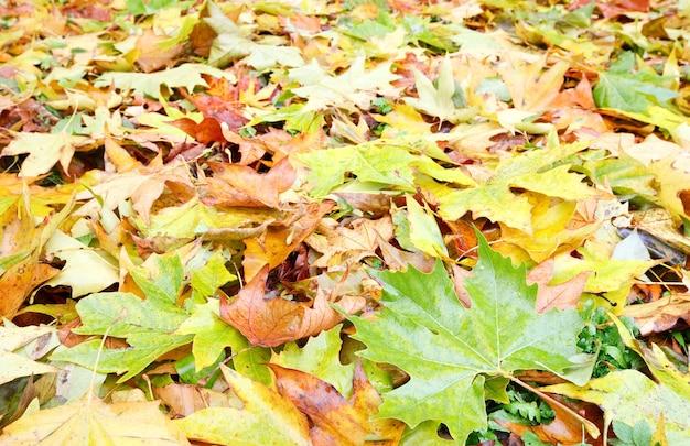 Żółte odcięte liście na jesiennej łące w parku