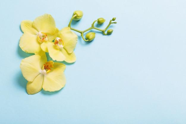 Żółte orchidee na niebieskiego papieru tle