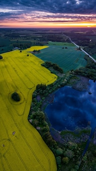 Żółte pole rzepaku obok stawu z dramatycznym odbiciem chmury w nim