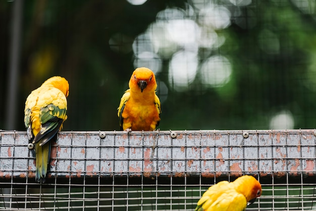 Żółte ptaki w ogrodzeniu