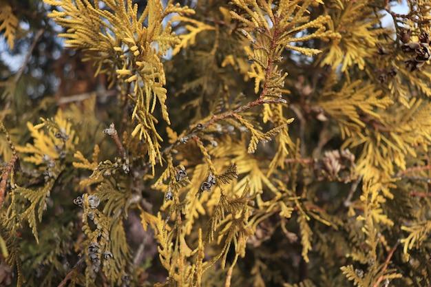 Żółte rośliny żyjące liście w zimowym tle z roślin