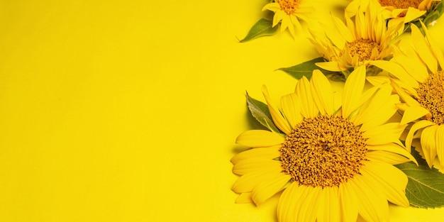 Żółte słoneczniki na jasnym żółtym tle. letni jasny szablon kartki z życzeniami, format banera