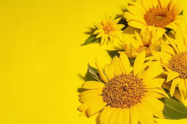 Żółte słoneczniki na jasnym żółtym tle. letni jasny szablon kartki z życzeniami, miejsce na tekst