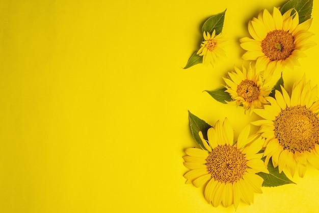 Żółte słoneczniki na jasnym żółtym tle. letni jasny szablon kartki z życzeniami, widok z góry