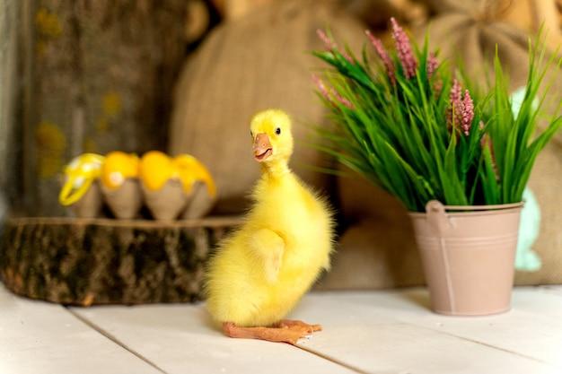 Żółte śmieszne kaczątko z roślinami i malowanymi jajkami