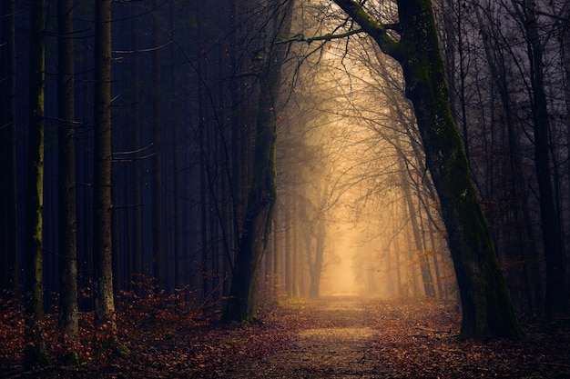 Żółte światła między drzewami