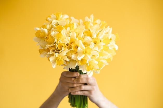 Żółte tło i męskie dłonie z bukietem żółtych żonkili. pojęcie pozdrowienia i dzień kobiet.