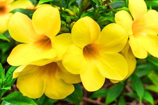 Żółte tropikalne kwiaty