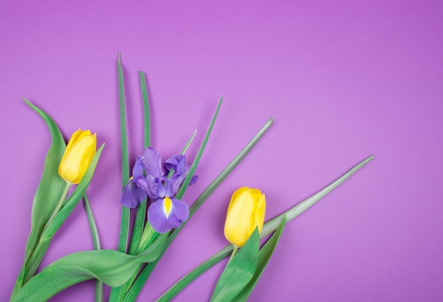 Żółte tulipany i irys fioletowy kwiat