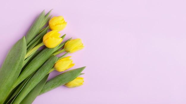 Żółte tulipany na fioletowym tle