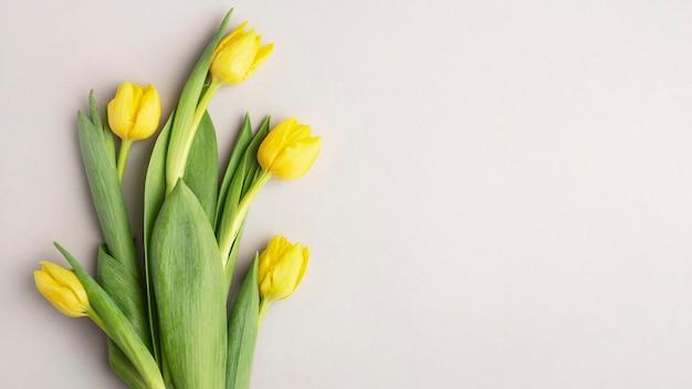 Żółte tulipany na szarym tle, baner