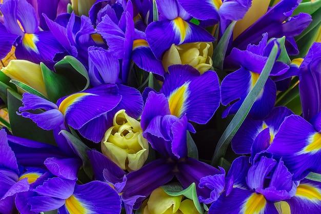 Żółte tulipany z irysami. widok z góry