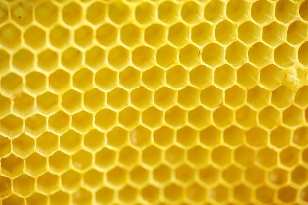 Żółte uszczelnione komórki na ramie. miód ramka z dojrzałym miodem. drewniana ramka z plastrami miodu wypełniona miodem akacjowym.