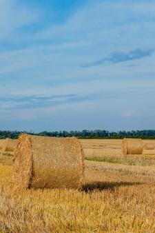 Żółte złote bele słomy siana na ściernisku, pola rolne pod błękitnym niebem z chmurami. słoma na łące. naturalny krajobraz wsi. uprawy zbóż, zbiory.