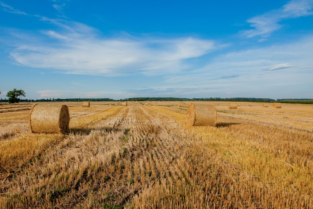 Żółte złote bele słomy siana na ściernisku, pola rolne pod błękitnym niebem z chmurami.