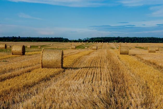 Żółte złote bele słomy siana na ściernisku, pola rolne pod błękitnym niebem z chmurami