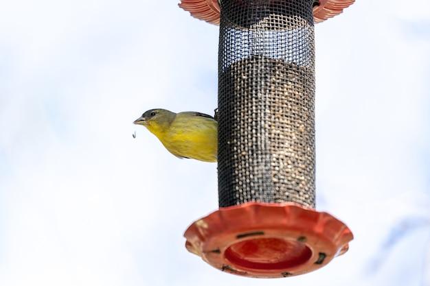 Żółto-czarny ptak na czarnej metalowej klatce