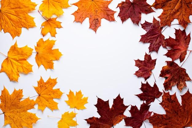Żółto-pomarańczowy i czerwony klon opadłych liści w kółko na białym tle z miejscem na tekst. jesienna pocztówka