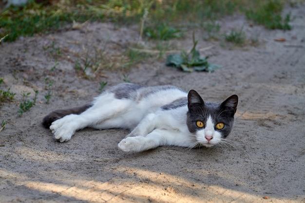 Żółtooki kot odpoczywa na ziemi na świeżym powietrzu i patrzy w kamerę