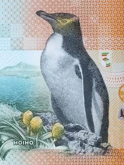 Żółtooki pingwin portret z nowozelandzkich pieniędzy