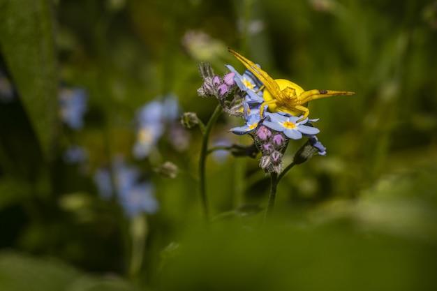 Żółty chrząszcz siedzi na kolorowych kwiatach